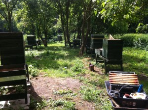 The apiary in willington woods (2)